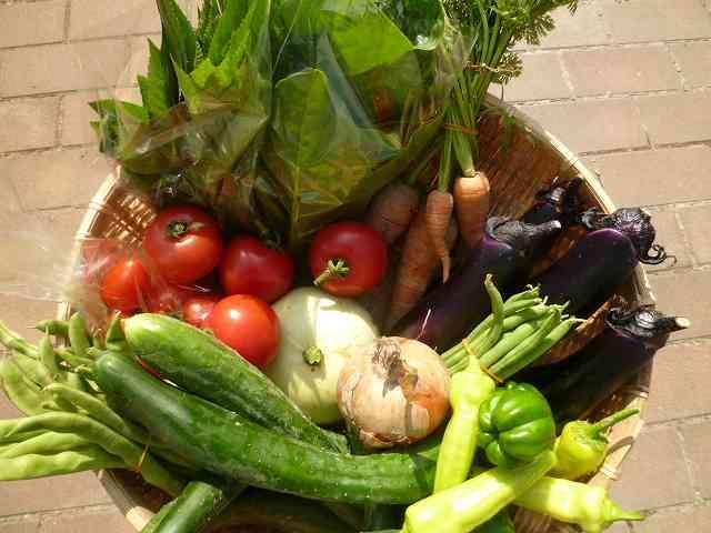 夏の野菜セット