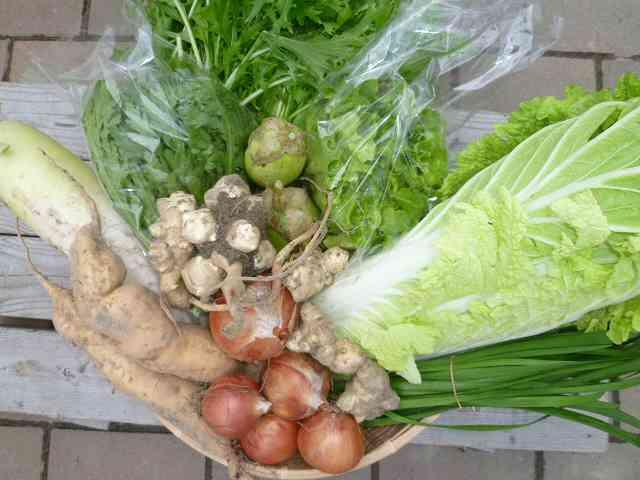 冬野菜セット