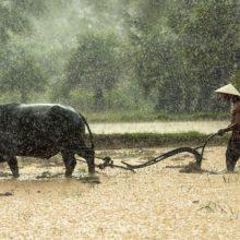 南大阪と南河内の有機農家情報