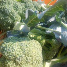 野菜セット 2020-05-29