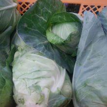 野菜セット 2020-06-05