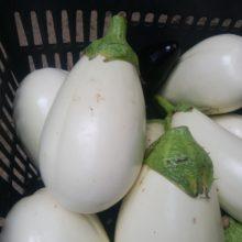 野菜セット 2020-06-26